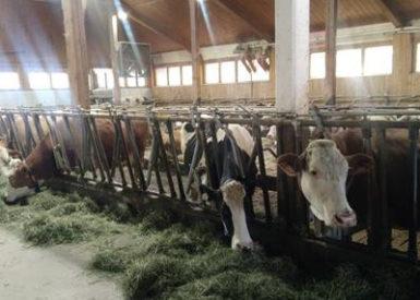 les-etudiants-de-bts-acse-de-retour-dun-voyage-detude-sur-les-systemes-laitiers